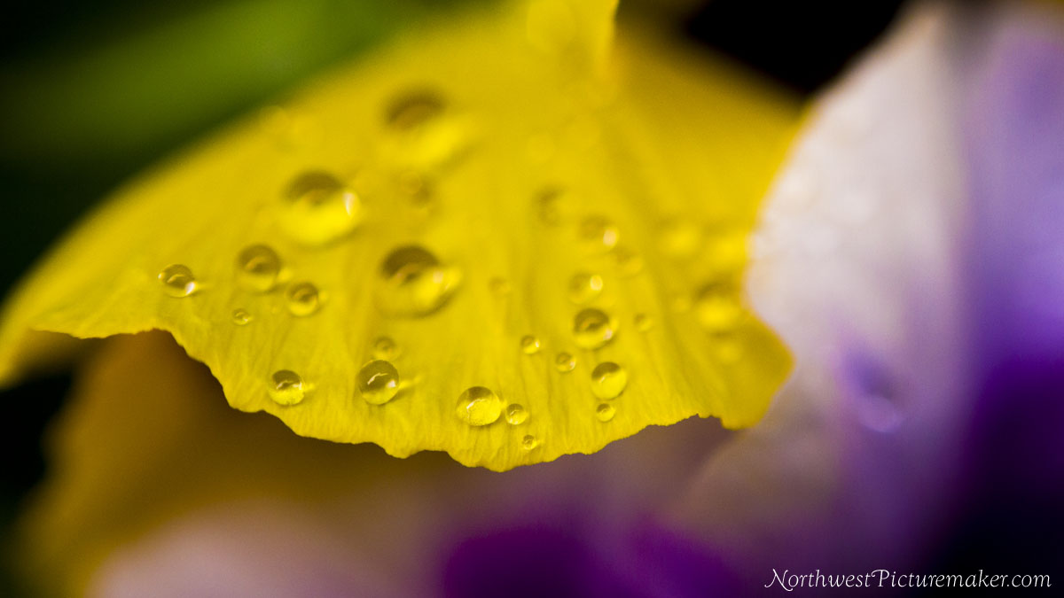 Rain Droplets on Flower Petal