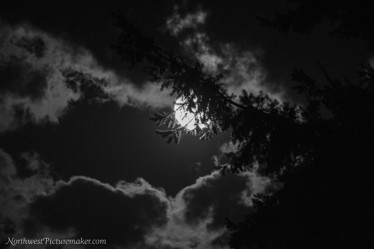 Super Moon and Clouds and Evergreen Tree